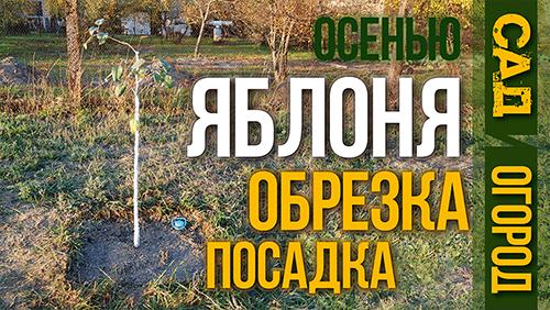 посадка яблони осенью тарас кириченко