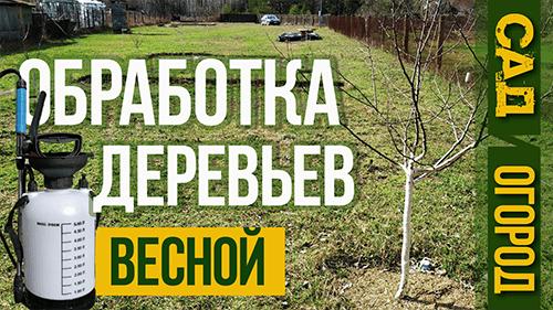 обработка плодовых деревьев весной от вредителей и болезней homeworktaras тарас кириченко